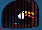 Toucan Escape