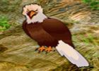 Big Eagle Forest Escape