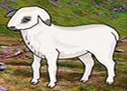 Big Mountain Lamb Escape