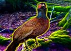 Big Pheasant Forest Escape