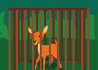 Deer Escape From Cage