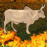 fire-forest-bull-escape