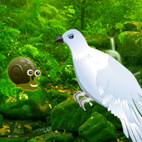 green-forest-dove-escape