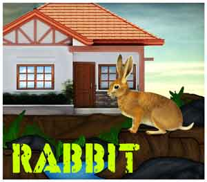 rabbit-rescue