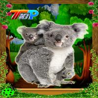 Rescue The Koala