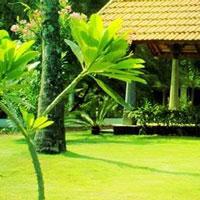 lush-farm-house-escape