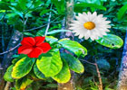 Tropical Flower Forest