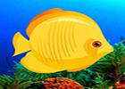 G2R Underwater Fish Rescue