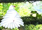 G2R Wild Parrots Rescue